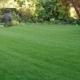 Rasen erneuert