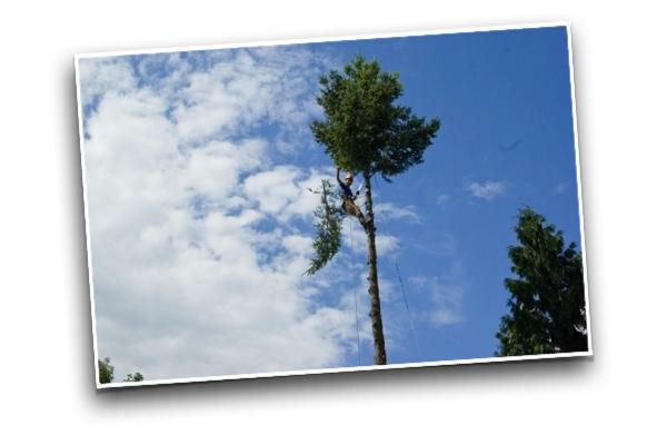 Baum-fällen