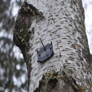Baumnummer