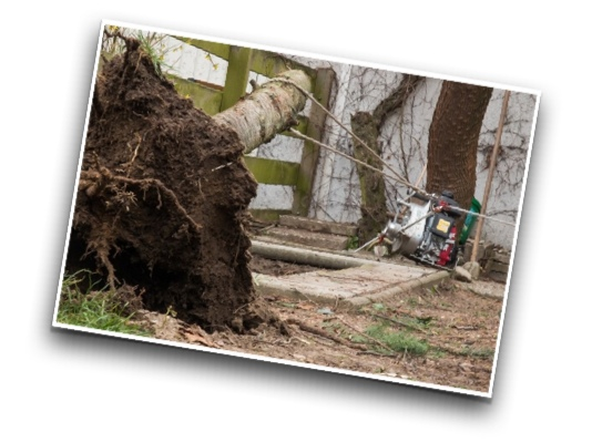 Baumstumpf-entfernen