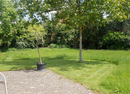 Rasen und Blumenwiese