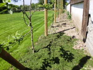 Rasenschnitt auf Gehölzflächen mulchen