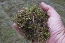 Moos und Rasenfilz durch Rasen vertikutieren entfernt