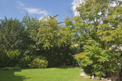 Grenzabstände für Bäume und Sträucher