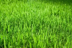 Welcher Rasen soll es sein?