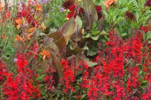 Stauden und einjährige bringen Farbe in den Garten