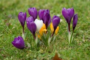 Links für Gartenfreunde