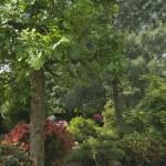 Baum und Strauch