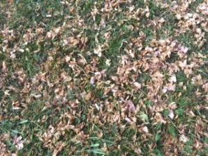 Blütenblätter auf dem Rasen