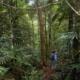 Tiefland-Dschungel