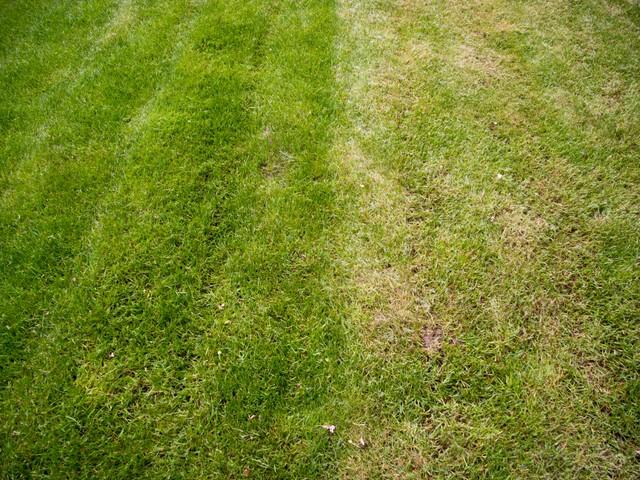Der Rasen-Schnitt ist entscheidend