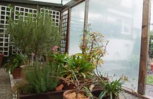 Winterquartier für Kübelpflanzen