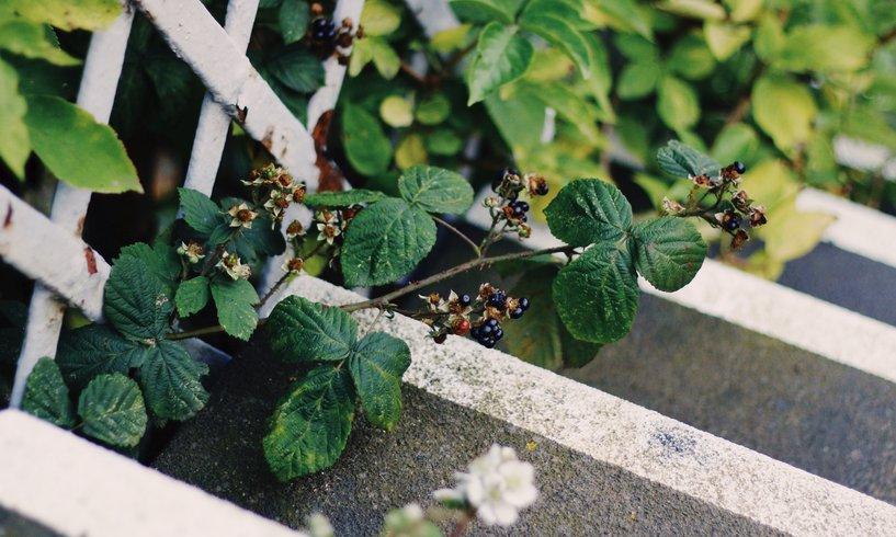 Gartentreppen